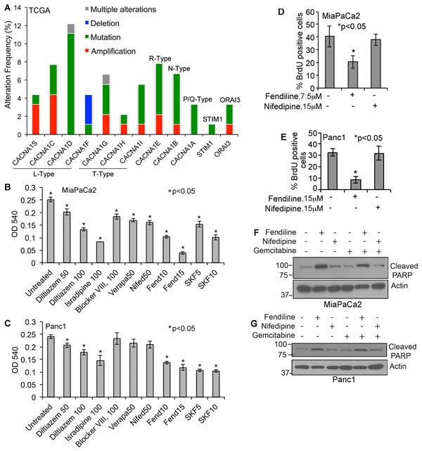 Human PDACs show alterations in voltage-gated and store operated calcium channel expression and calcium channel inhibitors induce cytotoxicity in pancreatic cancer cells: