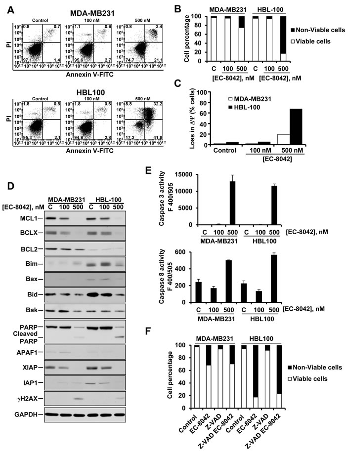 Effect of EC-8042 on apoptotic cell death.