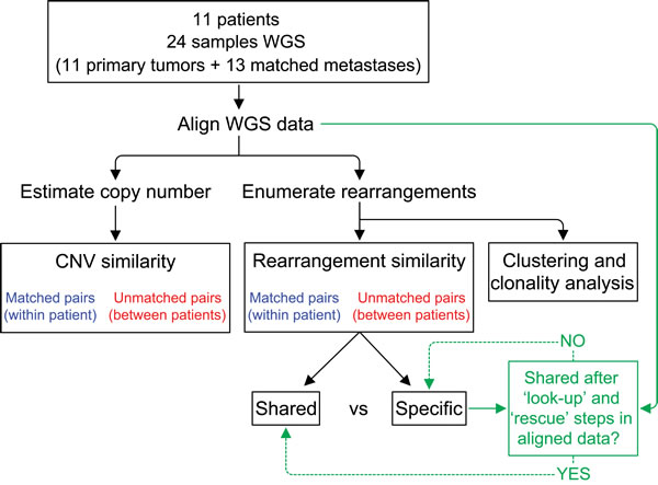 Analysis schema for comparison of structural genomic variation among primary-metastasis breast tumor pairs.