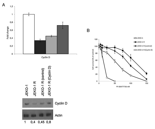Modulation of Cyclin D1 expression in the resistant JEKO-1 cell line.