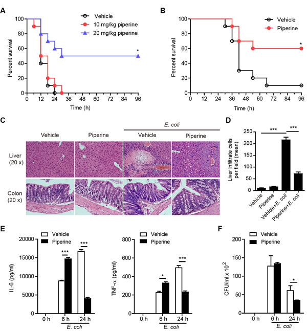 Piperine administration confers resistance to bacterial infection and attenuates sepsis.