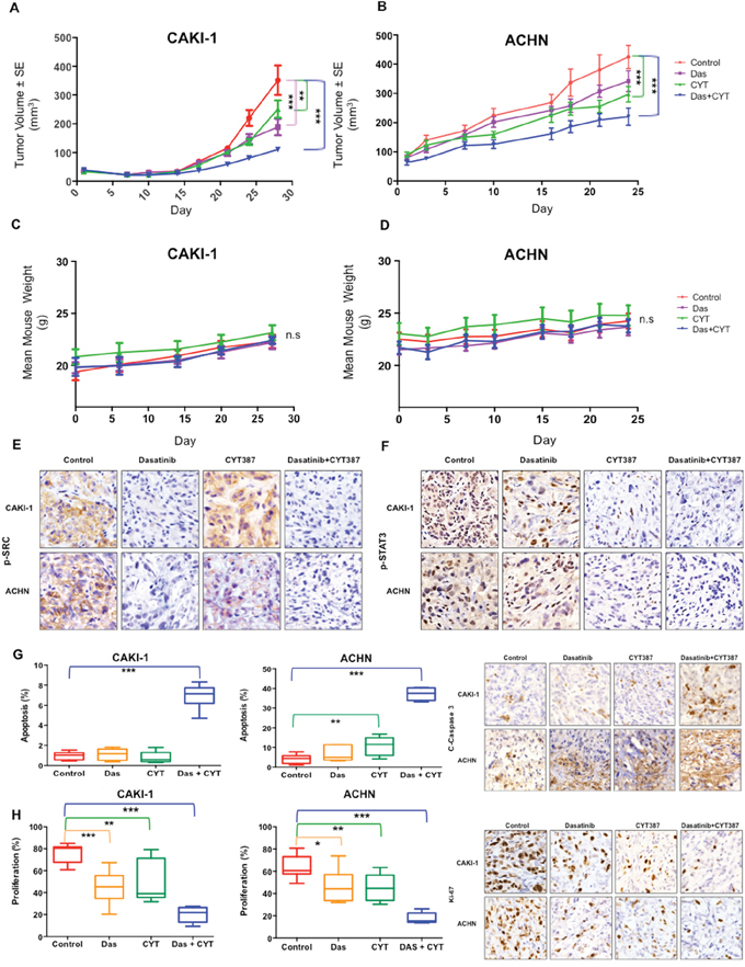 In Vivo efficacy of combined Src and STAT3 inhibition.