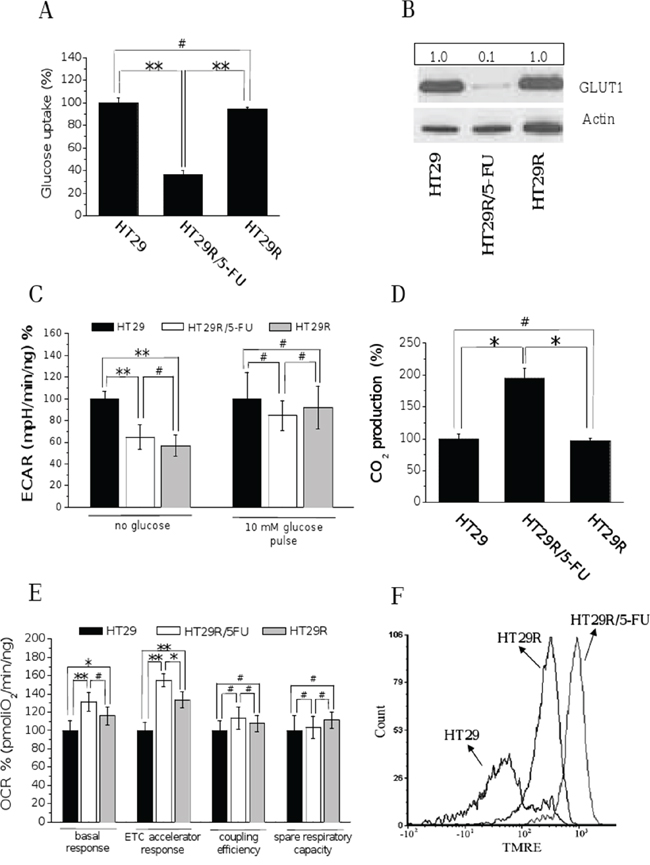 Chronic treatment with 20 μM 5-FU of HT29R decreases glucose utilization and commits cells to a respiratory metabolism.