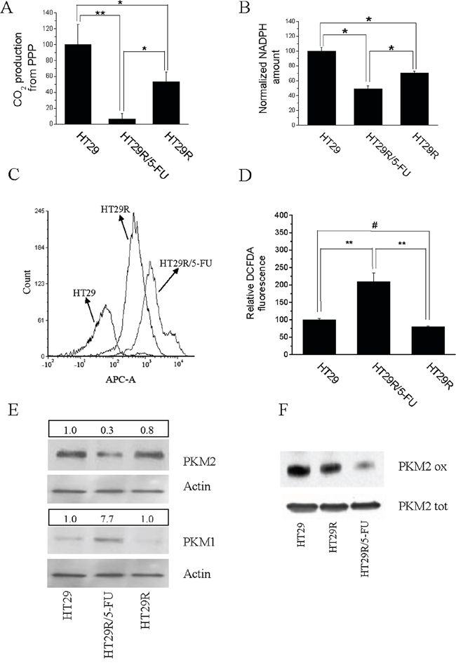Acute treatment with 20 μM 5-FU modifies redox equilibrium of HT29R cells inhibiting PPP and NADPH synthesis.