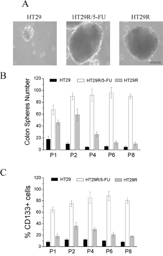 Analysis of stemness of HT29, HT29R and HT29R/5-FU cells.