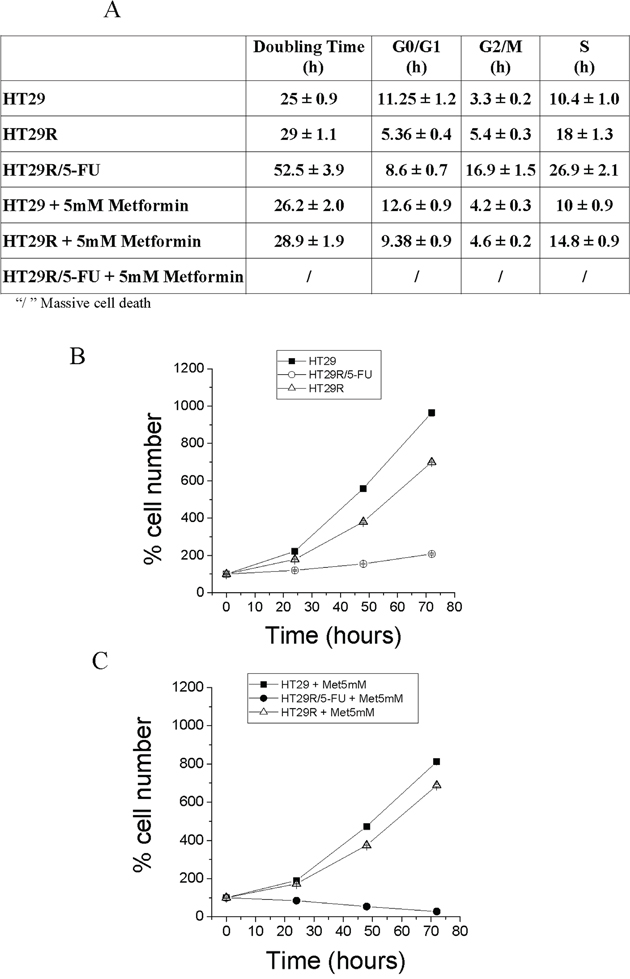Cell proliferation and cell cycle analysis of HT29, HT29R and HT29R/5-FU treated with metformin.