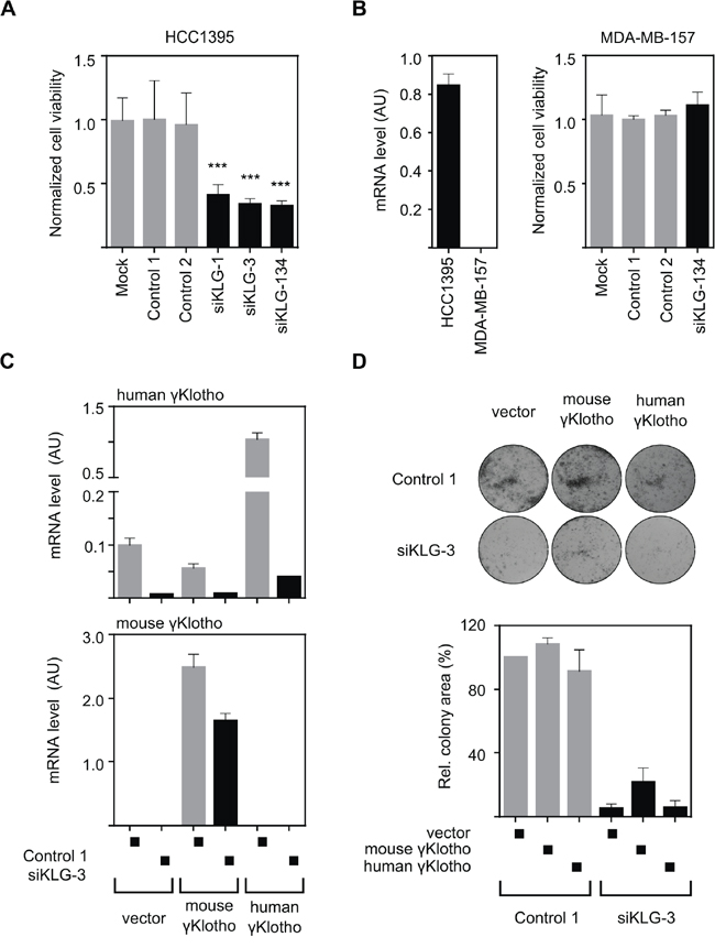 The growth inhibitory effect of γKlotho knockdown is specific.