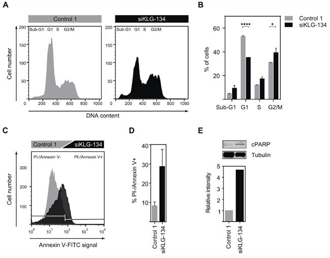 γKlotho knockdown leads to cell-cycle arrest and apoptosis.