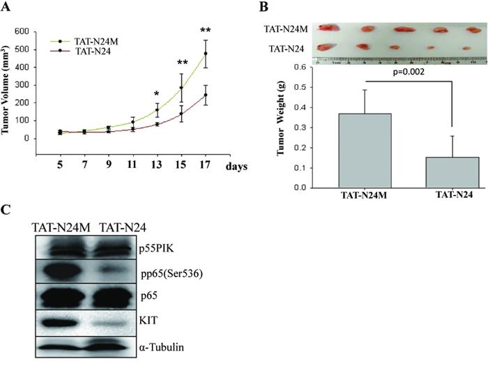 Pharmacologic inhibition of p55PIK by TAT-N24 restored Imatinib sensitivity in IMA-resistance-GIST tumors.