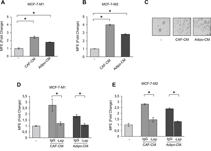 Leptin mediates the effects of stromal cell-CM on breast cancer cell mammosphere formation.