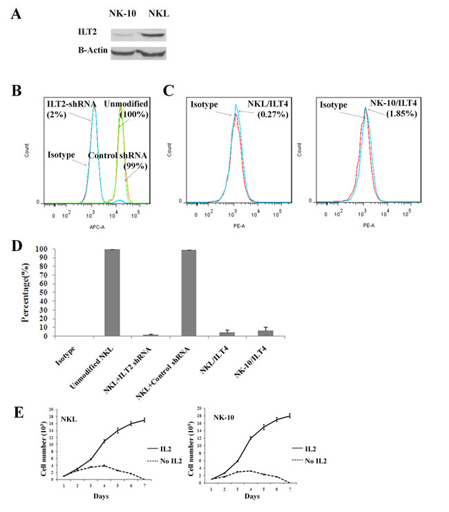 NK cells can be engineered to silence ILT2.