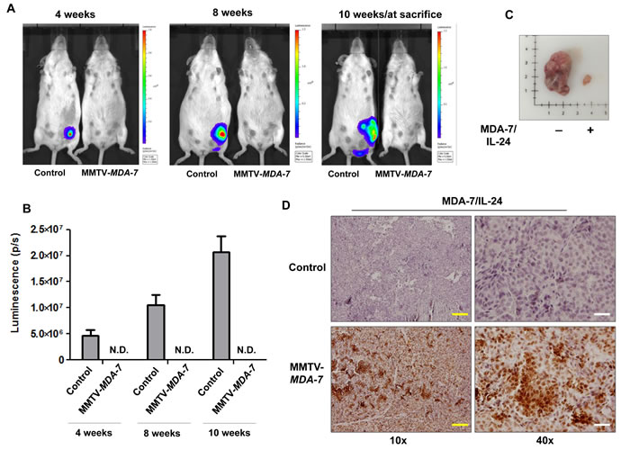 MDA-7/IL-24 suppresses tumor growth in MMTV-