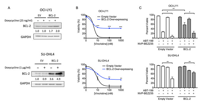 DLBCL cells over-expressing BCL-2 are resistant to a chemotherapeutic drug but remain sensitive to BEZ235 and ABT-199.