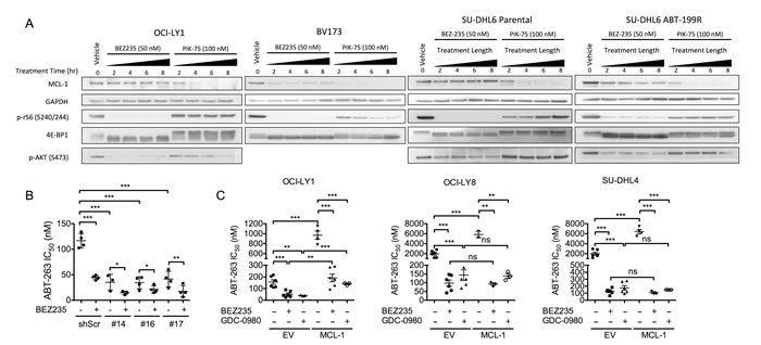 BEZ235 does not affect MCL-1 expression in OCI-LY1 cells.