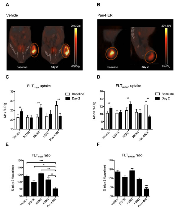 FLT uptake is reduced upon treatment with Pan-HER.