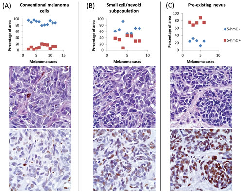 Automated image analysis of distribution of 5-hmC immunoreactivity by ImageJ/IHC Profiler.