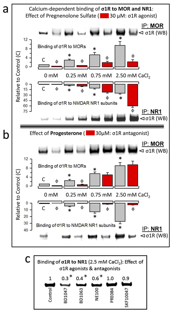 Calcium-dependent binding of σ1Rs to MORs and NR1 subunits: Influence of σ1R regulation.