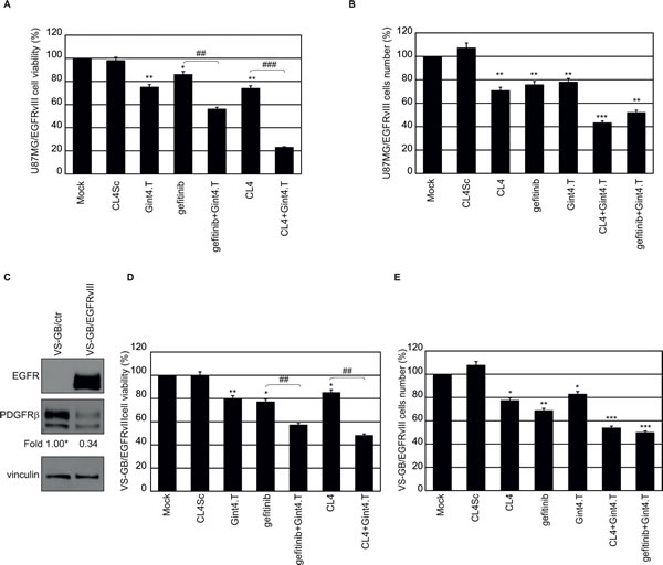 Combined inhibition of EGFRvIII and PDGFRβ in EGFRvIII-expressing GBM cells.