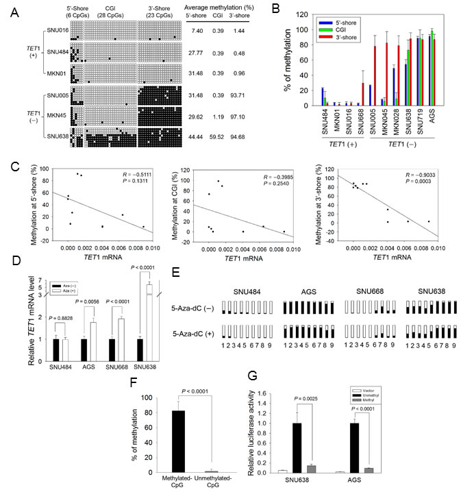 Association between CpG methylation proximal to the