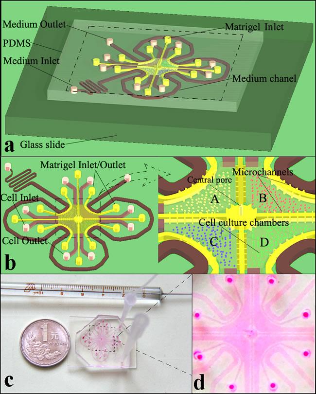 Microfluidic device blueprint and prototype.