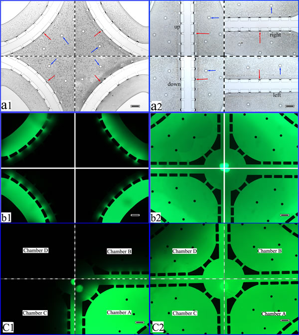 Performance validation of the co-cultural microfluidic device.