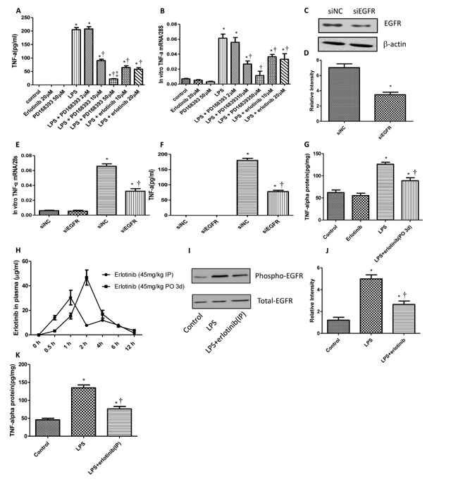 EGFR increases the production of myocardial TNF-α in response to LPS.
