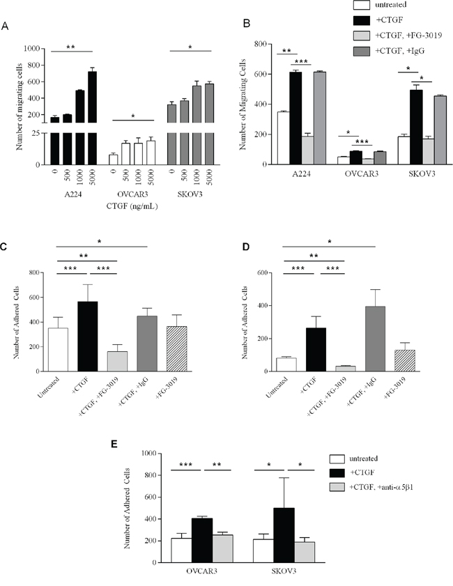 Functional studies of CTGF and FG-3019.