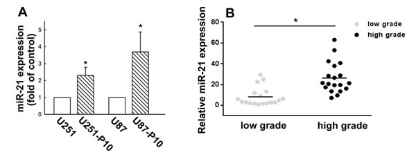 Elevated expression of miR-21 in cells of migration-prone sublines and high-grade glioma samples.