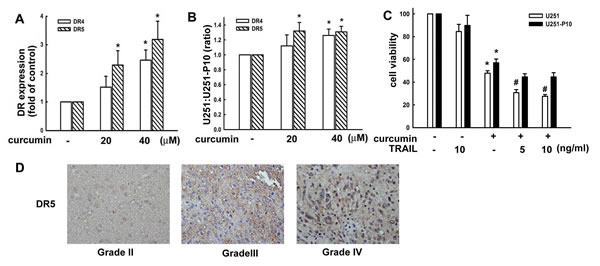 Migration-prone subline cells have a lower sensitivity to curcumin-induced cell death through death receptors.