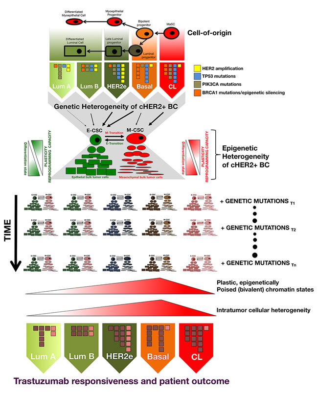 Figure B1-2: Genetic and epigenetic heterogeneity coalesce at the CSC level to differentially affect tumor evolution and clinical progression in individual tumors belonging to each cHER2+ molecular subtype.
