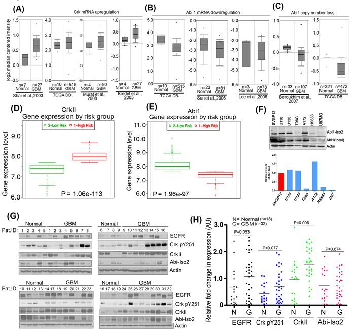 Reciprocal regulation of Crk and Abi1 genes in glioblastoma.