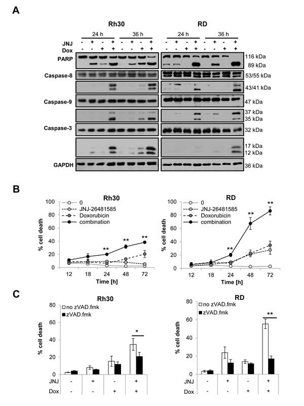 JNJ-26481585 and Doxorubicin cooperate to induce caspase activation and caspase-dependent apoptosis.
