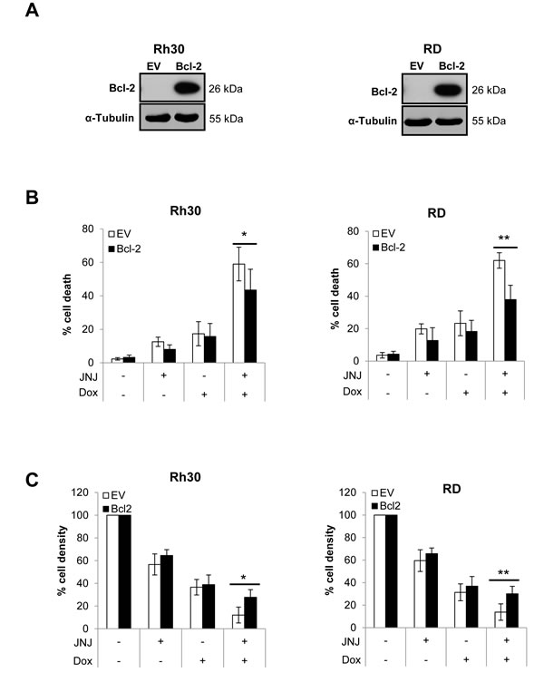 Overexpression of Bcl-2 inhibits JNJ-26481585/Doxorubicin-induced apoptosis.