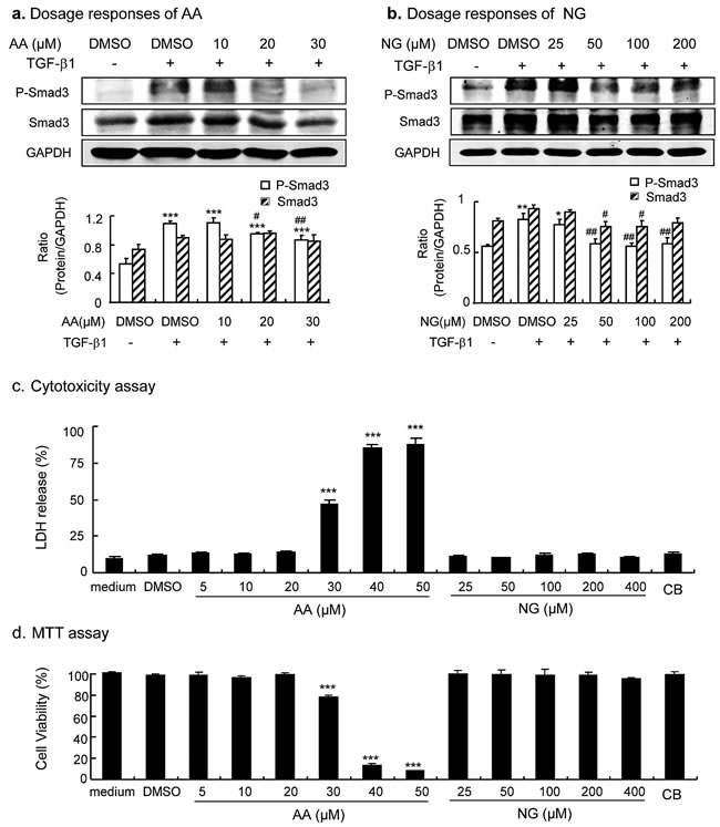 Dose-dependent effect of AA, NG, and their combination on inhibition of TGF-β/Smad3 signaling and cytotoxicity in cultured TECs.