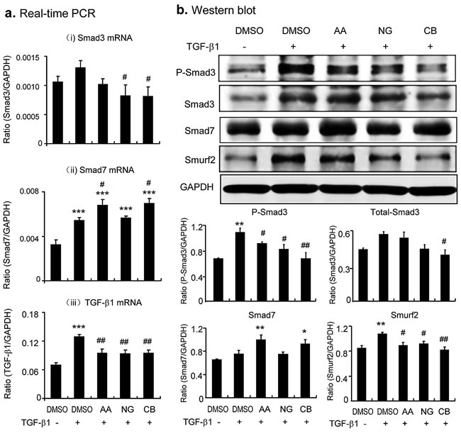 Combination of AA and NG produces an additive effect on inhibition of TGF-β/Smad signaling via differential mechanisms