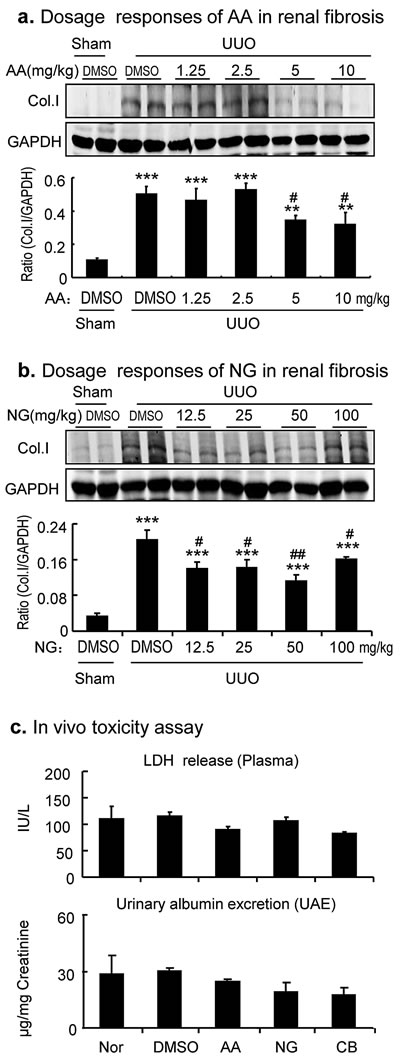 Dose-dependent effect of AA, NG, and their combination on inhibition of renal fibrosis in a mouse model of UUO.