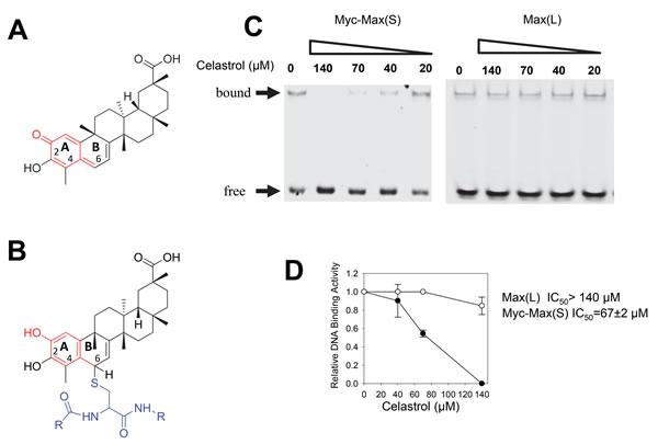 EMSA analysis of celastrol.
