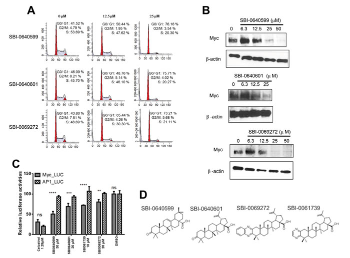 Celastrol and/or SBI compounds inhibit proliferation, promote Myc protein depletion and selectively inhibit a Myc-responsive promoter.