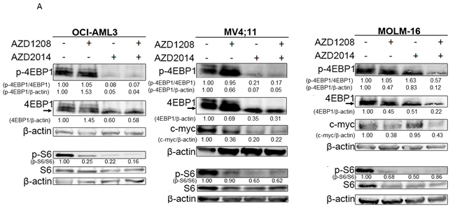 Molecular pathways affected by synergistic inhibition of AZD1208 and AZD2014.
