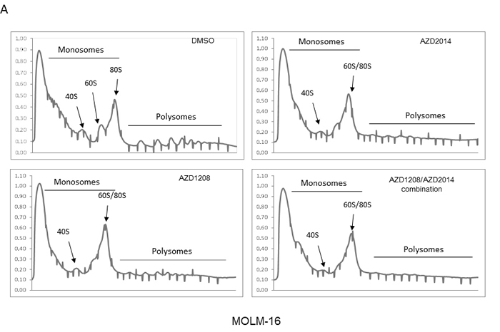Polysome profiles of MOLM16 AML cells treated with AZD1208 and/or AZD2014.