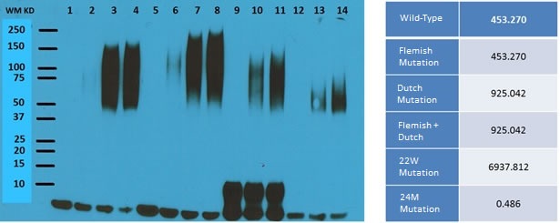 Western Blot results of different types of peptide treatment.