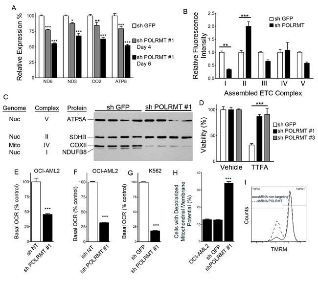 Consequences of POLRMT knockdown on mitochondrial function