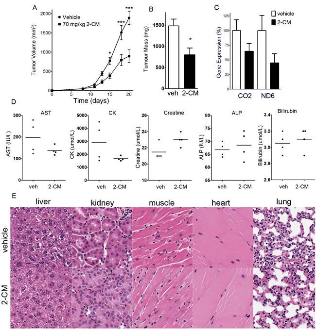 2-C-methyladenosine decreases tumour growth in OCI-AML2 xenografts.