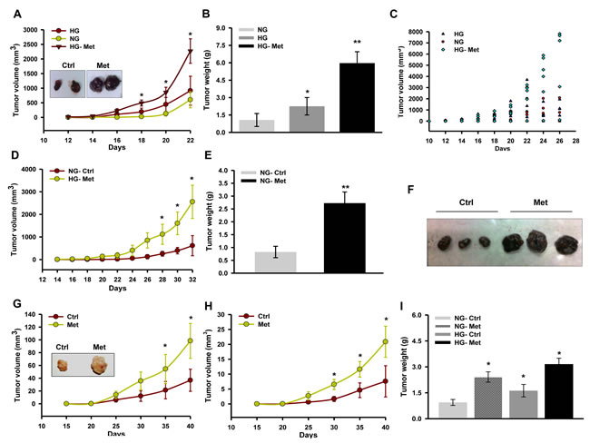 Metformin promotes melanoma tumor growth in mice.