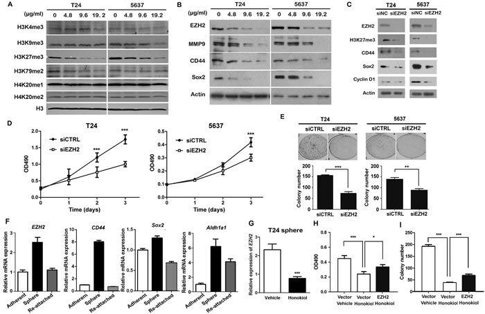 Honokiol suppressed the expression of EZH2 gene.