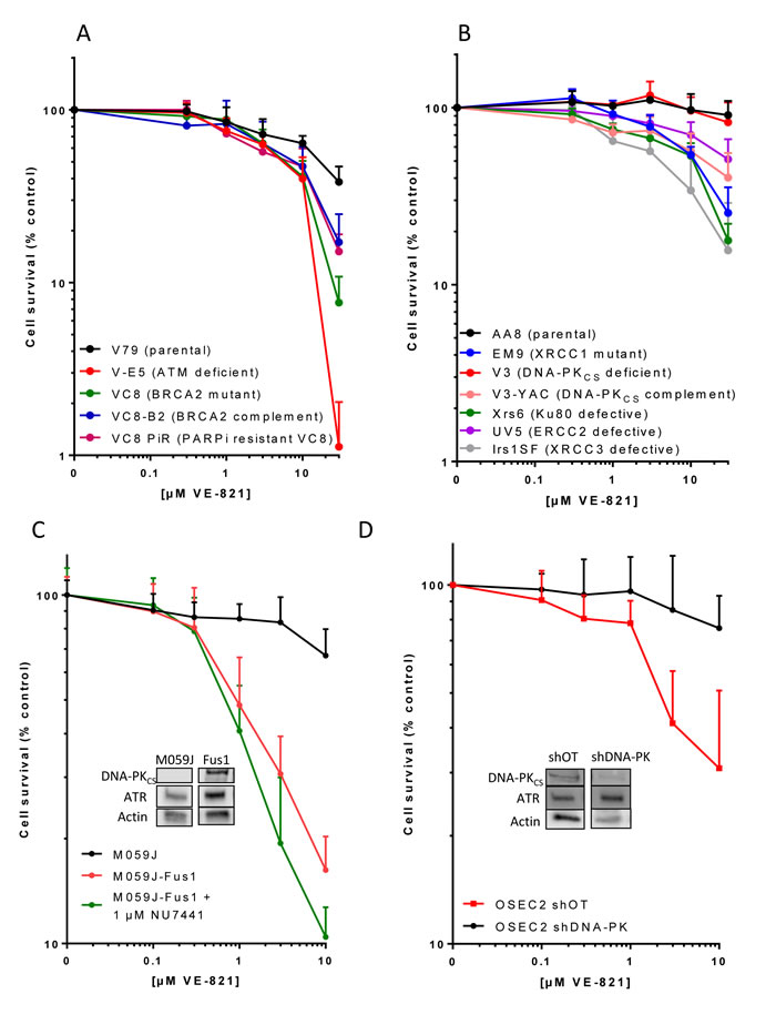The cytotoxicity of single-agent VE-821 in cells with different DDR defects.