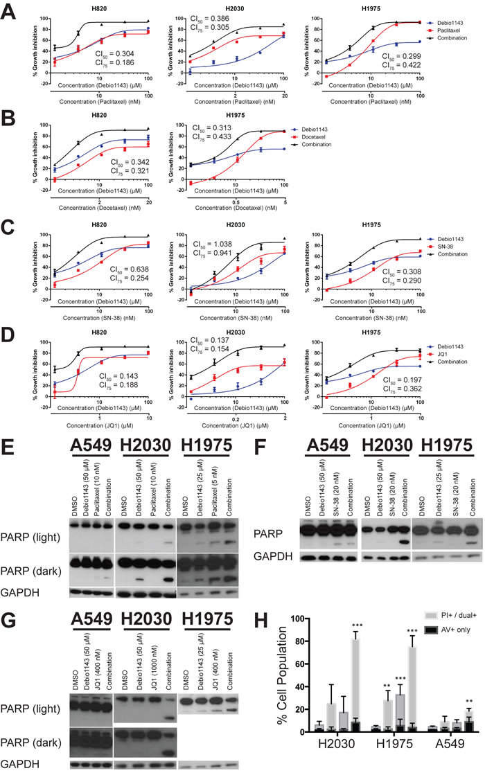Debio 1143 synergizes with several agents to inhibit growth of lung adenocarcinoma cell lines and induce apoptosis.