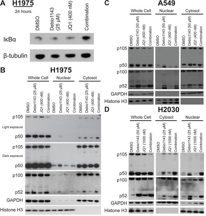Debio 1143 and JQ1 treatment activates NF-κB signaling.