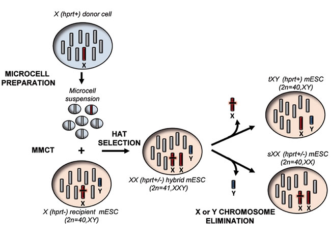 """Schematic overview of the """"genomic therapy"""" approach."""