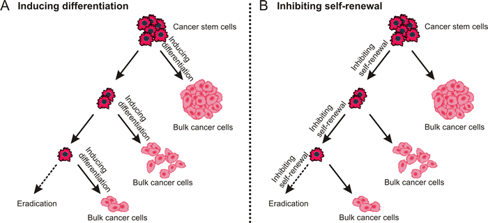 Destemming cancer stem cells.